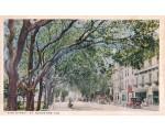Oaktree lined King Street