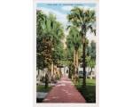 Palm Row, St. Augustine